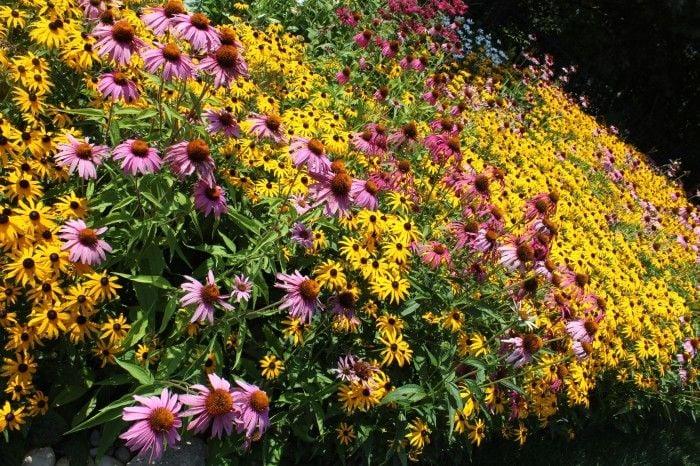 beautiful garden