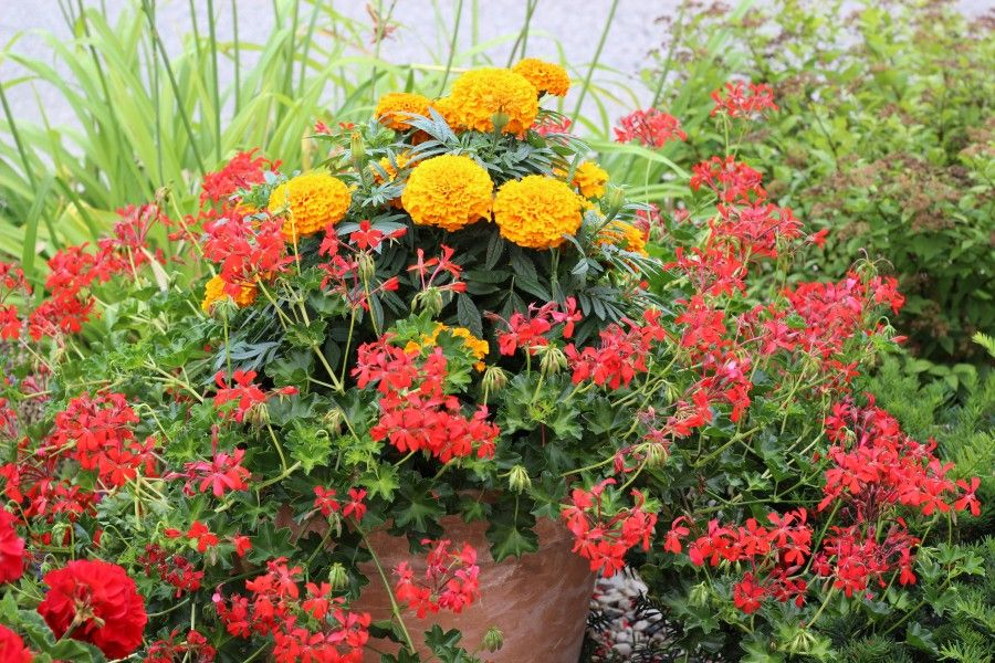 Pretty planter & container ideas