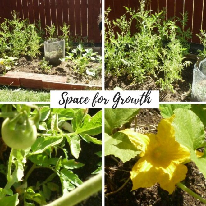 space vacation gardening