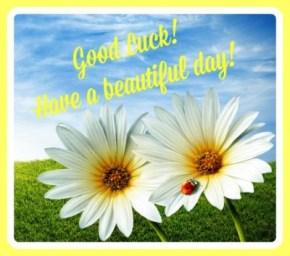 springdaisy good luck