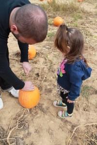 pumpkin picking 2013 035