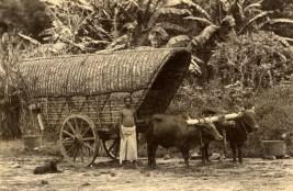Bullock Cart and a Dog