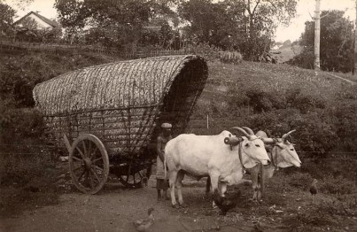 Bullock Cart & Driver