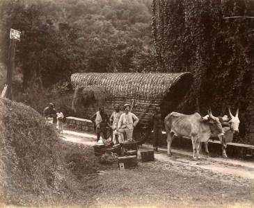 Bullock Cart Near Kanthale Tank with Natives