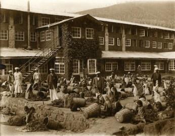 Group of Tea Estate Workers Seated on Floor