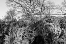 wsv_weihnachtsbaum-8833