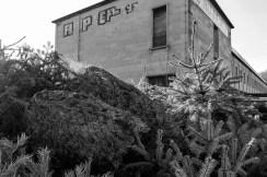 wsv_weihnachtsbaum-8852