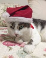 teobaldo gato natal