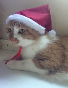 eddie jr. gato natal