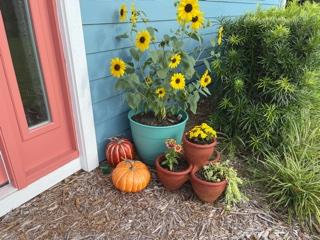 Fall pumpkins and sunflowers.