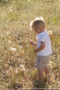 Linden looking at seed head