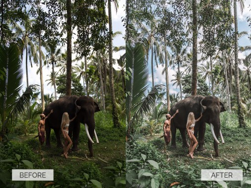 Before and after Bali Elephant