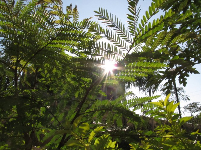 Sun Through Leaves