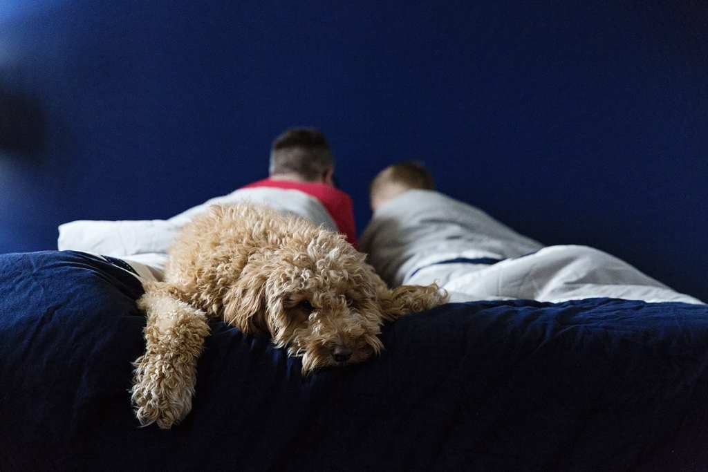 dog on bed during session for family photography in cornwall