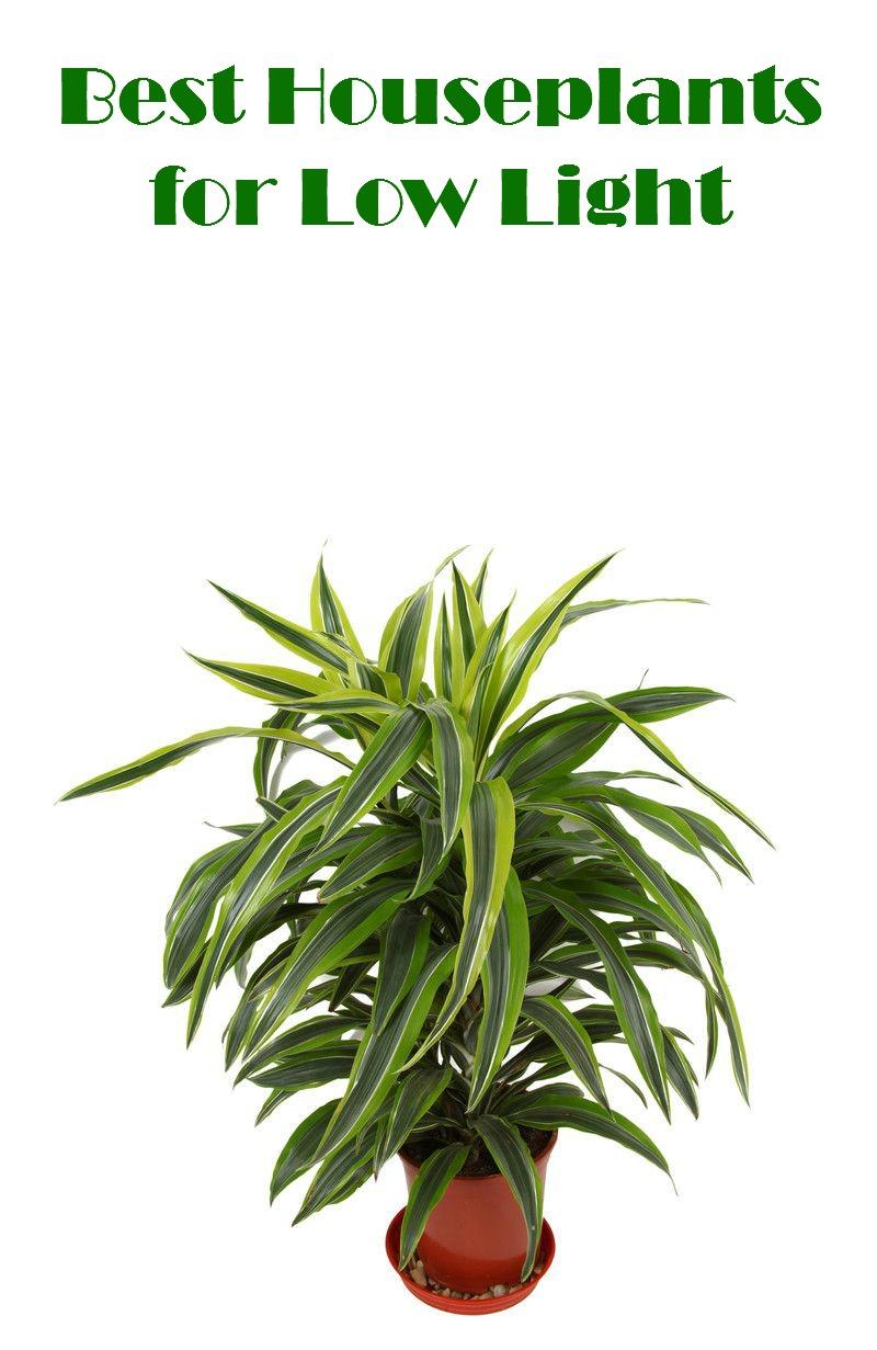 Best Houseplants for Low Light  sc 1 st  Mom Foodie & Best Houseplants for Low Light - Mom Foodie azcodes.com