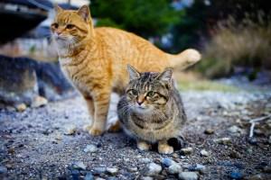 chats errants japon