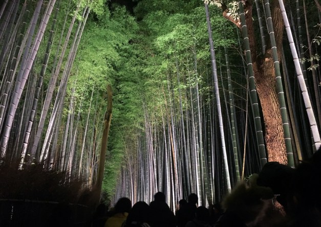Walking through the bamboo grove at night
