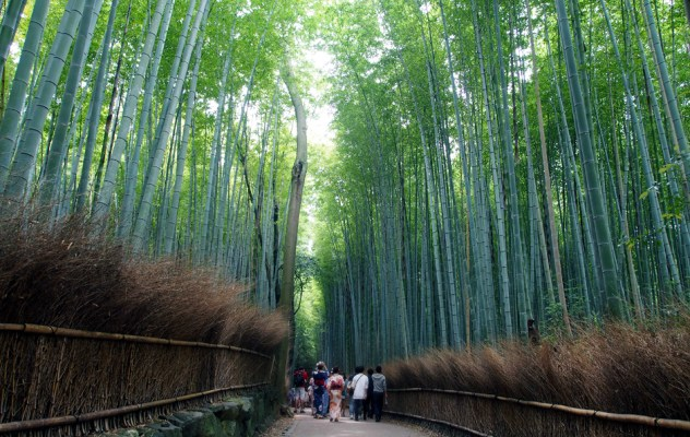 The famous bamboo grove!