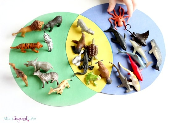 venn diagram explained cobalt wiring sorting animals activity