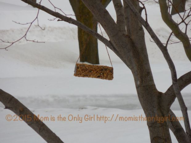 Hanging Homemade Bird Feeder