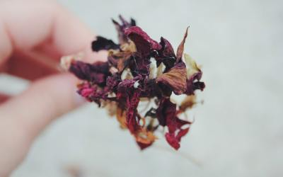 Eco Print with Natural Dyes: The Perfect Craft for Kids