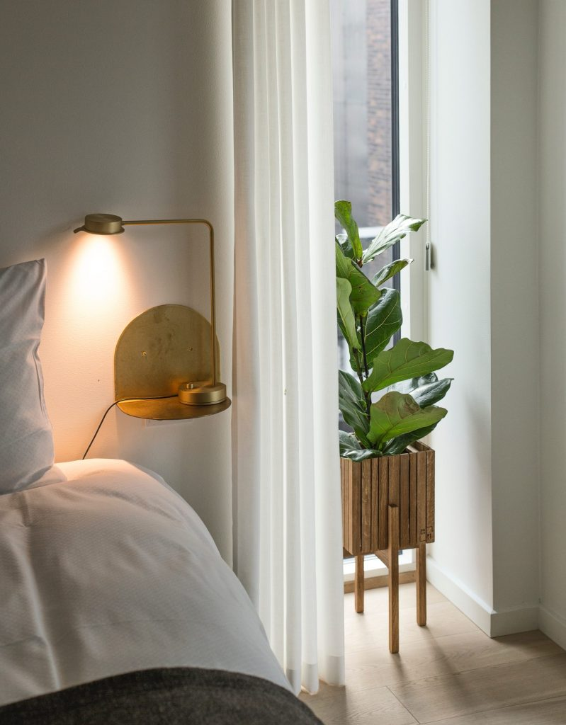 fiddle leaf fig tree in bedroom