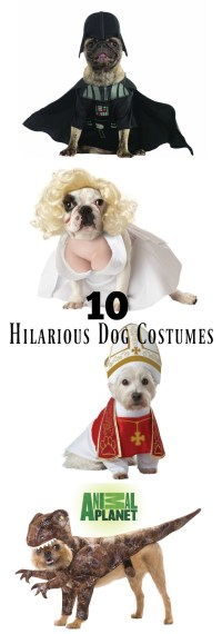 10 Most Hilarious Dog Costumes