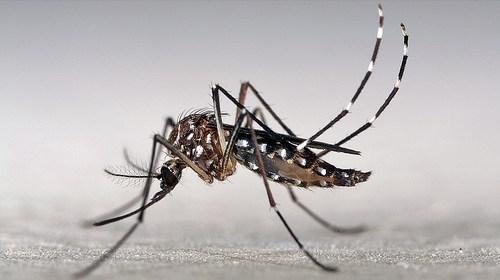 寶寶被蚊子叮!五個最佳防蚊方法 1