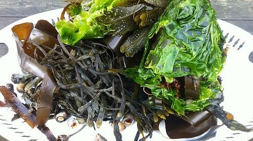 海帶的營養價值與好處!哪些人不能吃海帶? 1