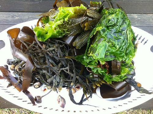 kelp food