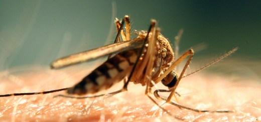 茲卡病毒警報 駐多明尼加提高警覺