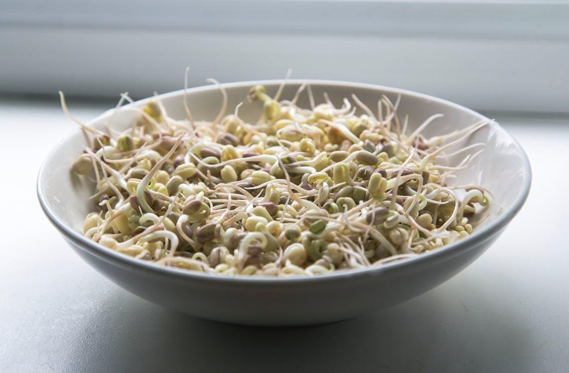 豆芽菜根本不能吃是真的嗎? 聽說大多都摻入有毒的保險粉