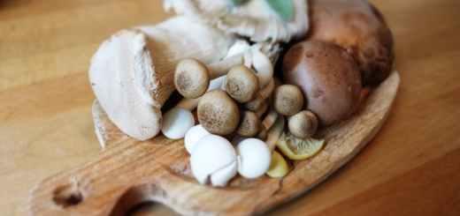 蘑菇重金屬謠言是真的嗎? 吃多了真的會中毒嗎?