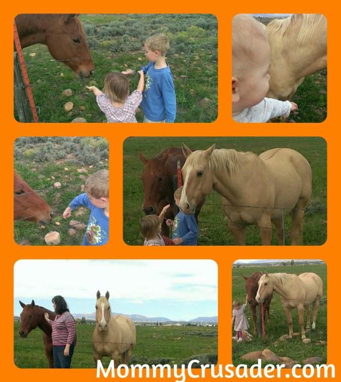 Horses   MommyCrusader.com