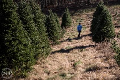 ChristmasTrees-7