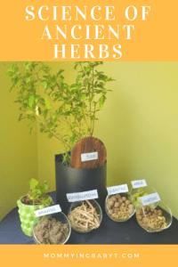 Nutrilite traditional herbs range. Nutrilite Tulsi, Nutrilite Ashwagandha, Nutrilite Brahmi and Nutrilite Amalaki-Vibhitaki-Haritaki.