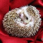 Say Hello to our new baby- Sparky the Hedgehog