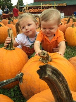The cutest little pumpkins in the patch!