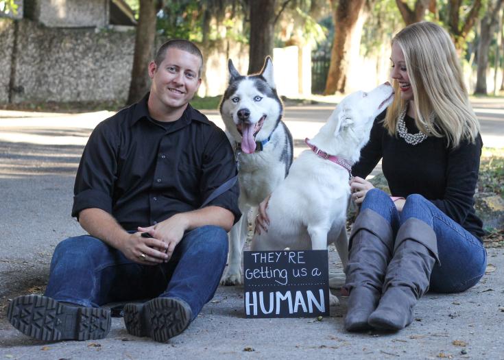 Pet Pregnancy Announcement