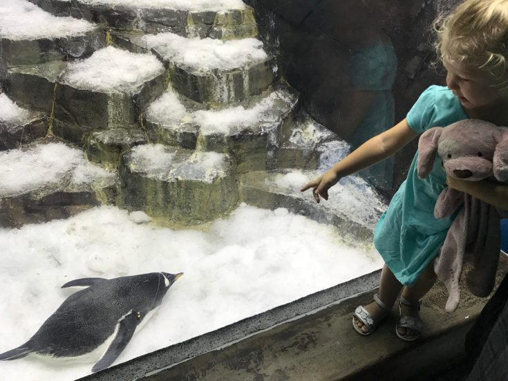 SeaWorld with Young Kids: Penguins