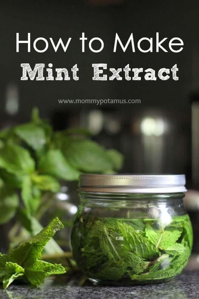 Mint Extract Recipe