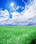 A green wheat field under an blue sky with the sun in zenithþ XX