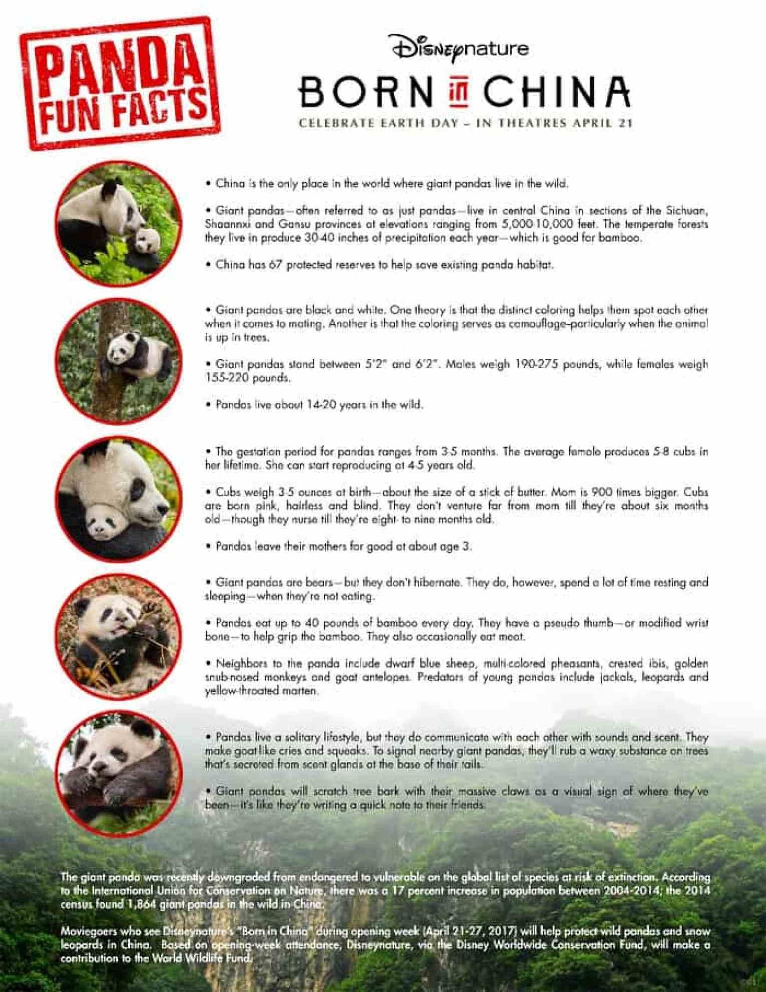 born in china panda fun facts