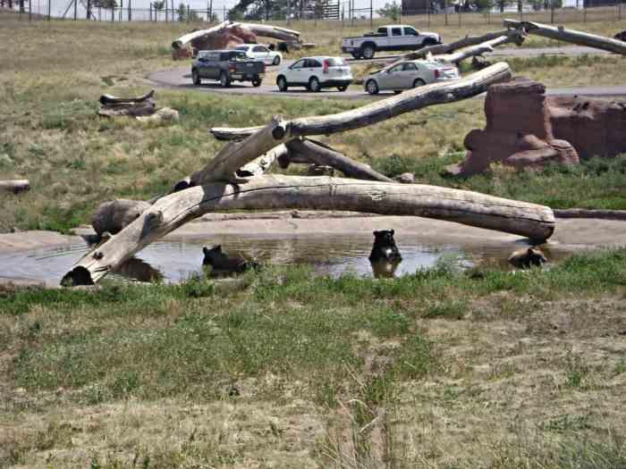 Bears in Bear Country USA