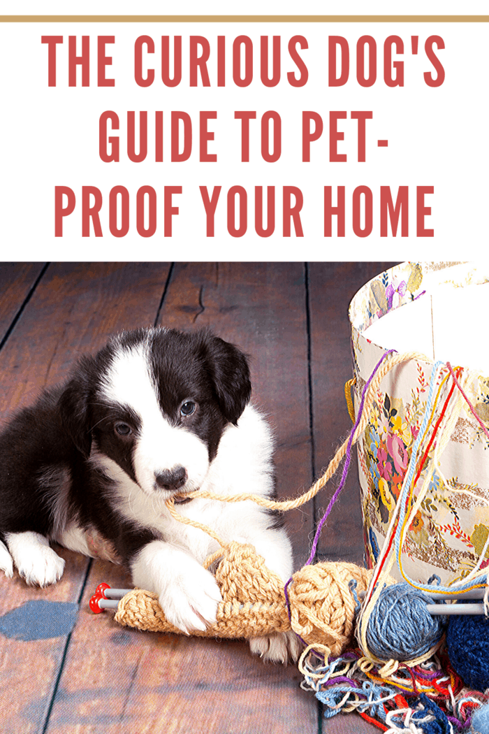 Here are Seven Ways to Pet-Proof Your Home