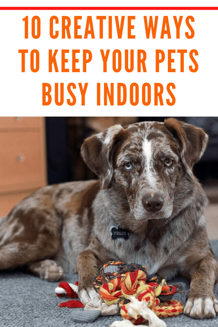 If it is raining outside and you want to keep your dog active and entertained then these 10 creative ways to keep your pets busy indoors will put a smile on your face and your dog's face and keep your dog from being bored.