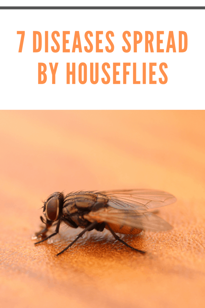 Out of all the diseases we're talking about, this is the most common fly-related one.