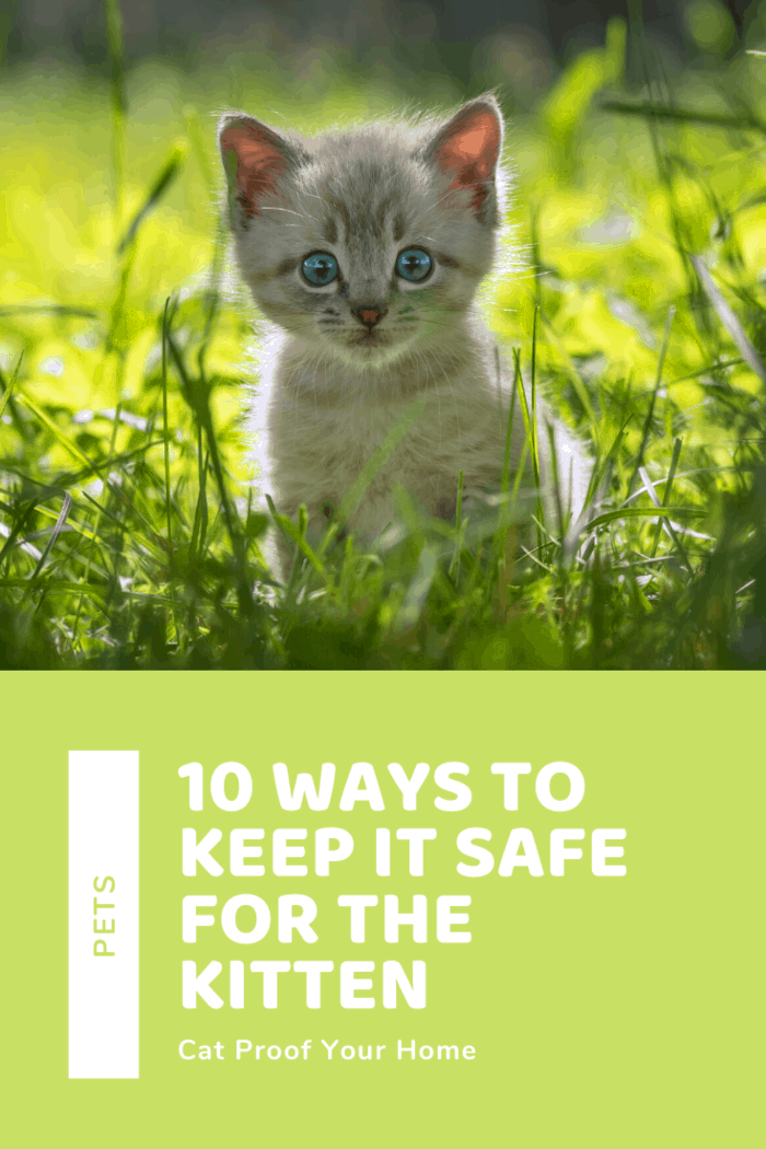 Cat Proof Your House! 10 Ways to Keep it Safe for the Kitten and enjoy the moments of curiosity and cuddles.