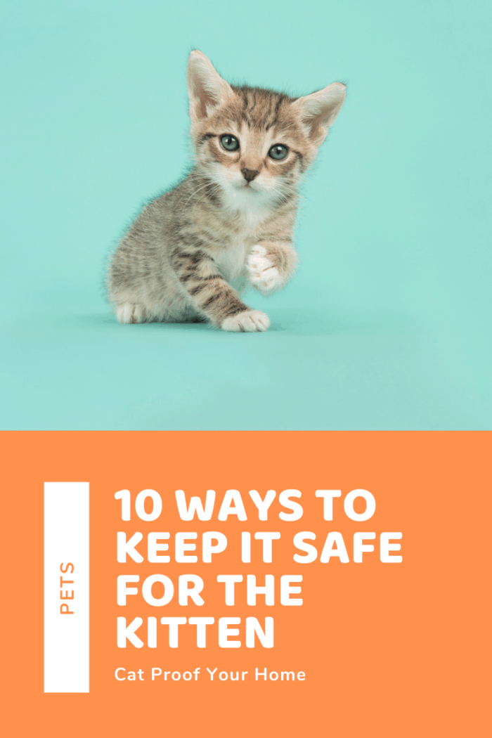 Part of the responsibility of caring for cats is keeping them safe. Unfortunately, even your house itself can prove dangerous for your cats. Here's how you can keep your home safe for them.