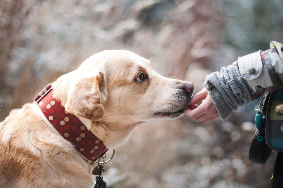 Top 9 Natural Pet Remedies and How They Work